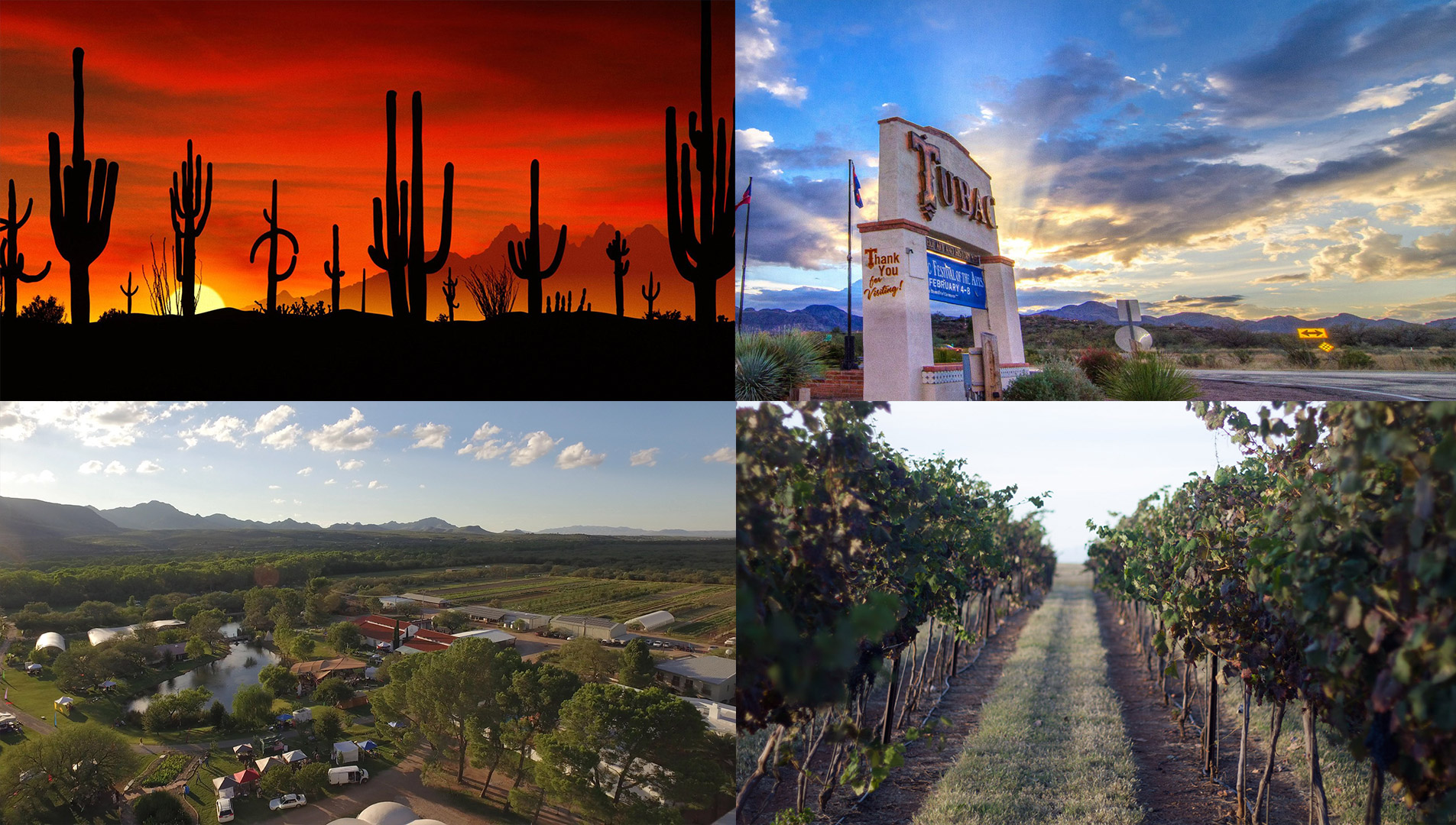 Composite-saguaros-tubac-avalon-vineyards.